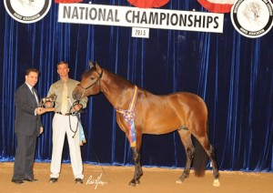 2015 IALHA National Grand Champion 2 yr old Colt