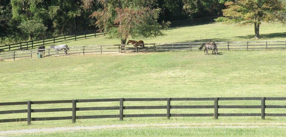Glen Aryn Farm PRE Andalusian Breeders