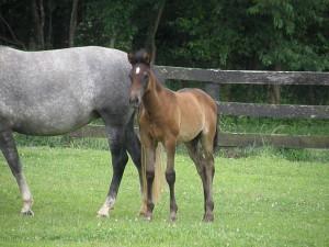 Glen Aryn Farm mare and foal